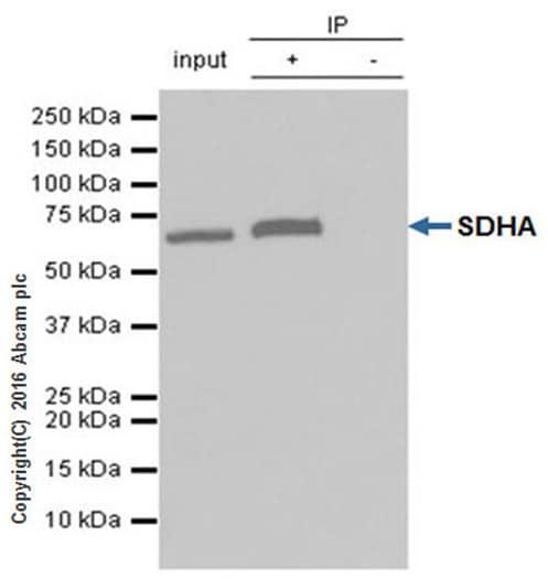 Immunoprecipitation - Anti-SDHA antibody [EPR9043(B)] (ab137040)