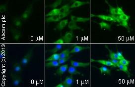 Functional Studies - Ciglitazone, PPARgamma agonist (ab141139)