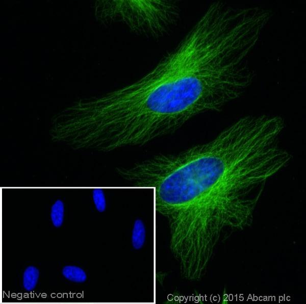Immunocytochemistry/ Immunofluorescence - Goat Anti-Mouse IgG H&L (Alexa Fluor® 488) (ab150113)