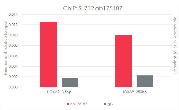 ChIP - Anti-SUZ12 antibody [EPR5234(N)] - ChIP Grade (ab175187)