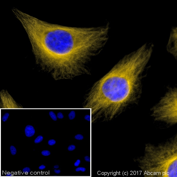 Immunocytochemistry/ Immunofluorescence - Goat Anti-Rabbit IgG H&L (Alexa Fluor® 568) (ab175471)