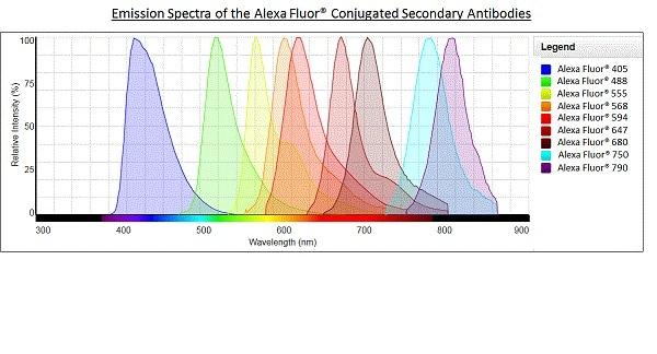 Alexa Fluor® - Goat Anti-Rabbit IgG H&L (Alexa Fluor® 568) preadsorbed (ab175696)