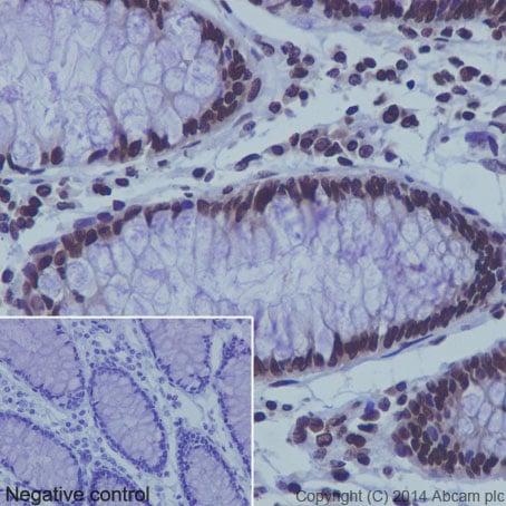Immunohistochemistry (Formalin/PFA-fixed paraffin-embedded sections) - Anti-Histone H3 (mono methyl K9) antibody [EPR16989] - ChIP Grade (ab176880)