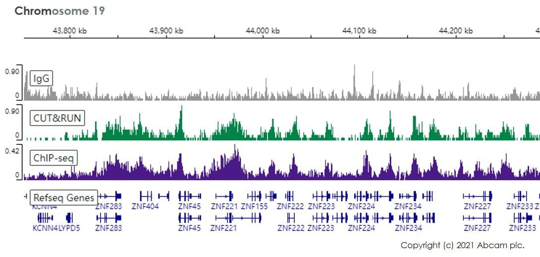 CUT&RUN sequencing - Anti-Histone H3 (tri methyl K9) antibody [EPR16601] - ChIP Grade (ab176916)