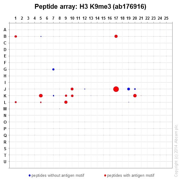 Peptide Array - Anti-Histone H3 (tri methyl K9) antibody [EPR16601] - ChIP Grade (ab176916)