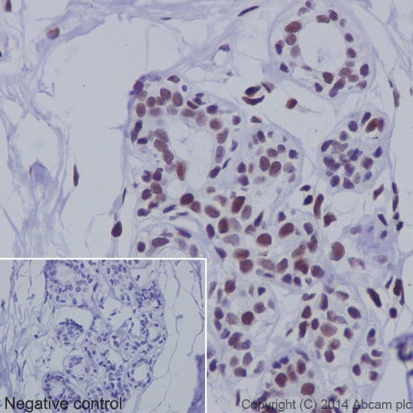 Immunohistochemistry (Formalin/PFA-fixed paraffin-embedded sections) - Anti-PML Protein antibody [EPR16792] (ab179466)