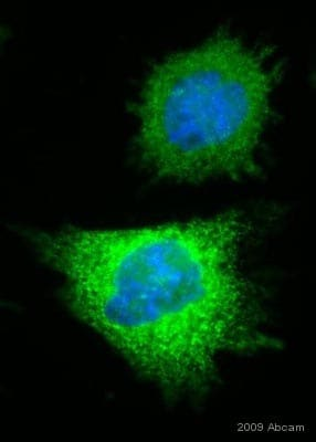 Immunocytochemistry/ Immunofluorescence - Anti-6X His tag® antibody [HIS.H8] (ab18184)