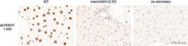 Immunohistochemistry (Formalin/PFA-fixed paraffin-embedded sections) - Anti-mH2A1 antibody [EPR9359(2)] (ab183041)