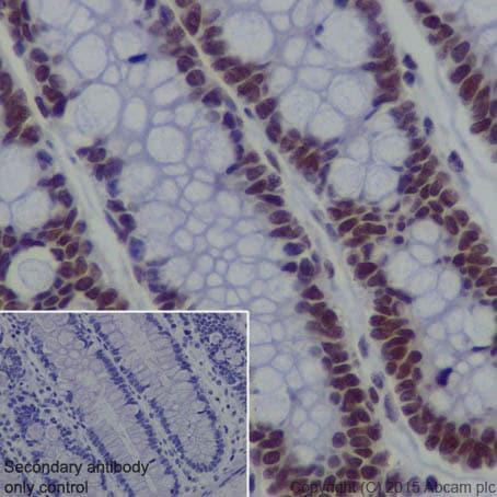 Immunohistochemistry (Formalin/PFA-fixed paraffin-embedded sections) - Anti-EHMT2/G9A antibody [EPR18894] (ab185050)