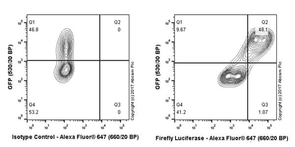 Flow Cytometry - Anti-Firefly Luciferase antibody [EPR17789] - N-terminal (ab185923)