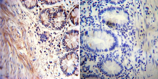 Immunohistochemistry (Formalin/PFA-fixed paraffin-embedded sections) - Anti-Acetylcholinesterase antibody [HR2] (ab2803)