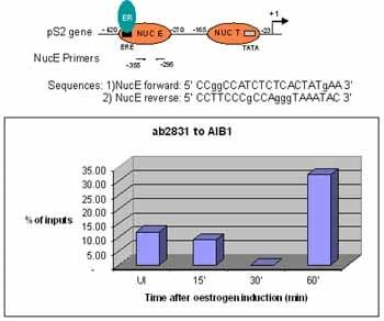 ChIP - Anti-SRC3 antibody (ab2831)