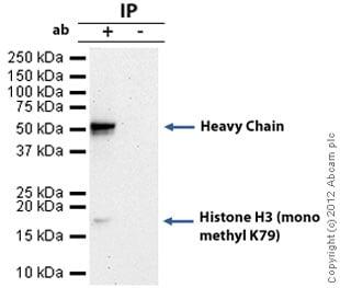 Immunoprecipitation - Anti-Histone H3 (mono methyl K79) antibody - ChIP Grade (ab2886)
