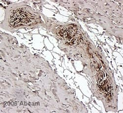Immunohistochemistry (Formalin/PFA-fixed paraffin-embedded sections) - Anti-FKBP12 antibody (ab2918)