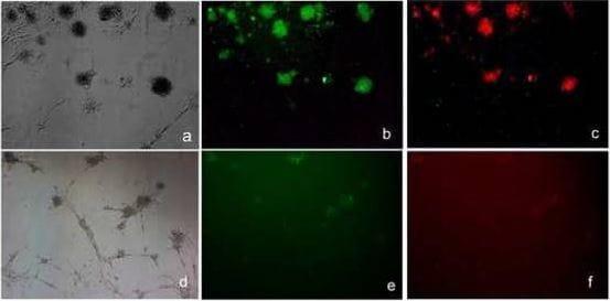 Fluorescence Microscopy - APC Conjugation Kit;- Lightning-Link(ab201807)