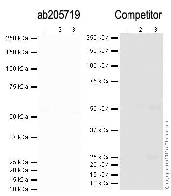 Western blot - Goat Anti-Mouse IgG H&L (HRP) (ab205719)