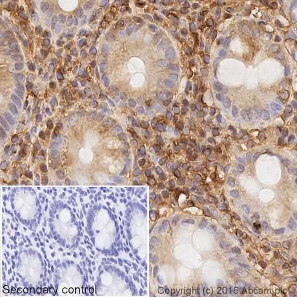 Immunohistochemistry (Formalin/PFA-fixed paraffin-embedded sections) - Goat Anti-Rabbit IgG H&L (Biotin) (ab207995)