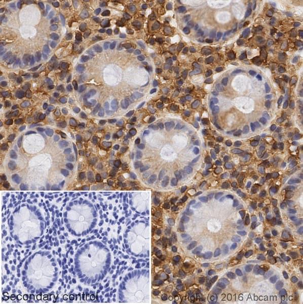 Immunohistochemistry (Formalin/PFA-fixed paraffin-embedded sections) - Donkey Anti-Rabbit IgG H&L (Biotin) (ab207999)