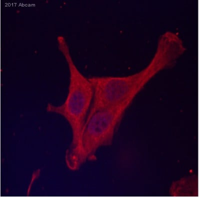 Immunocytochemistry/ Immunofluorescence - Anti-PD-L1 antibody [28-8] - Low endotoxin, Azide free (ab209889)