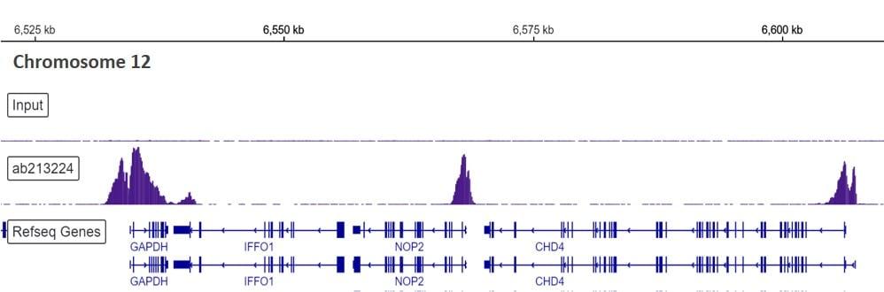 ChIP-sequencing - Anti-Histone H3 (tri methyl K4) antibody [EPR20551-225] - ChIP Grade (ab213224)