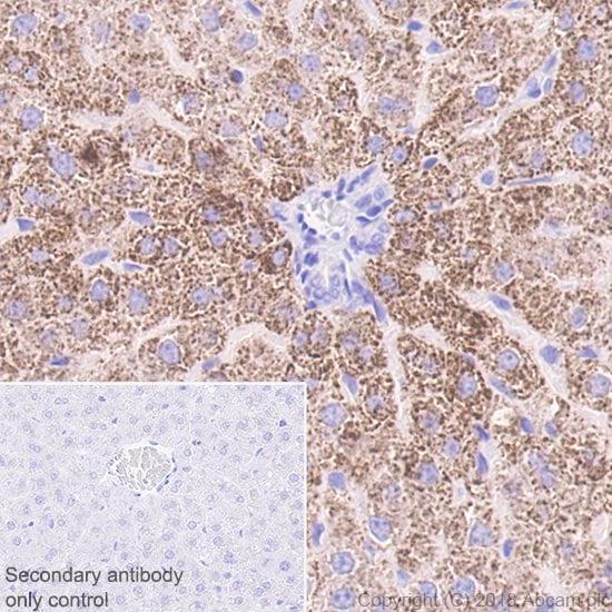 Immunohistochemistry (Formalin/PFA-fixed paraffin-embedded sections) - Anti-ABAT/GABA-T antibody [EPR20842] (ab216465)
