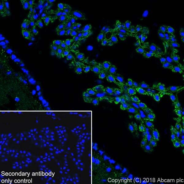 Immunohistochemistry (Frozen sections) - Anti-ABAT/GABA-T antibody [EPR20842] (ab216465)