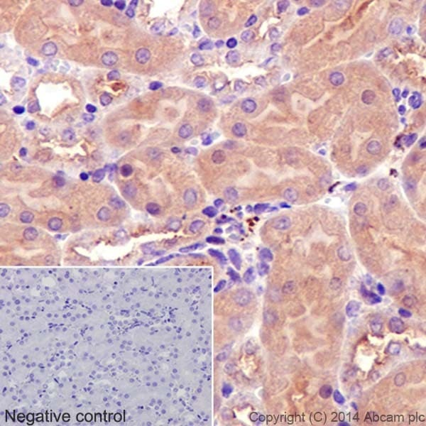 Immunohistochemistry (Formalin/PFA-fixed paraffin-embedded sections) - Anti-alpha Tubulin antibody [EP1332Y] - BSA and Azide free (ab216650)