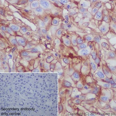 Immunohistochemistry (Formalin/PFA-fixed paraffin-embedded sections) - Anti-CD276 antibody [EPR20115] (ab219648)