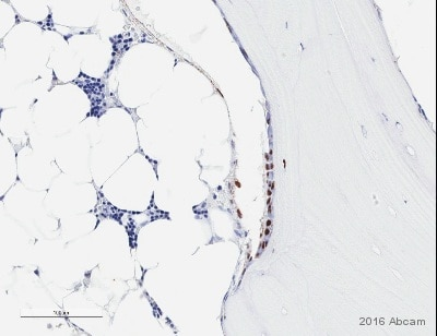 Immunohistochemistry (Formalin/PFA-fixed paraffin-embedded sections) - Anti-Sp7 / Osterix antibody - ChIP Grade (ab22552)
