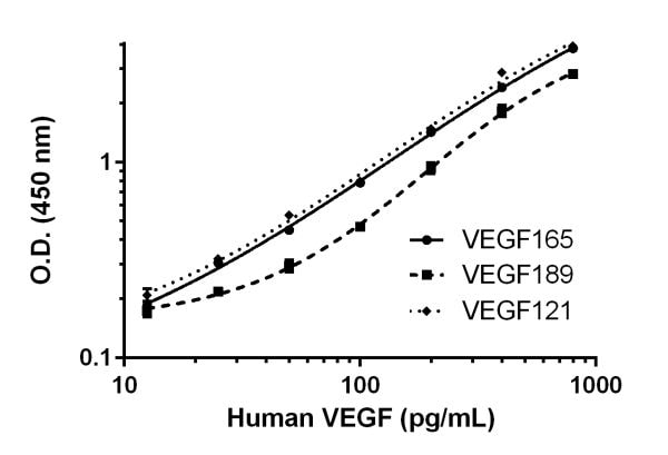 Serial dilutions of recombinant human VEGF189 and VEGF121.