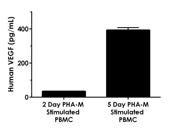 Comparison of VEGF in PHA-M stimulated and unstimulated human PBMC cell culture supernatants stimulated for different durations.