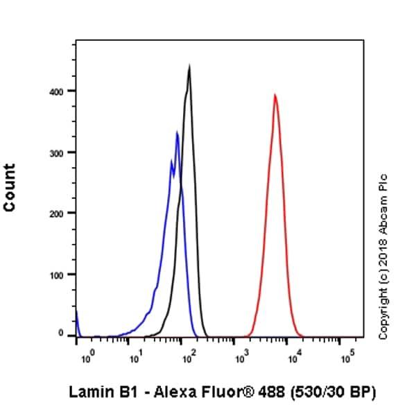 Flow Cytometry - Anti-Lamin B1 antibody [EPR22165-121] (ab229025)