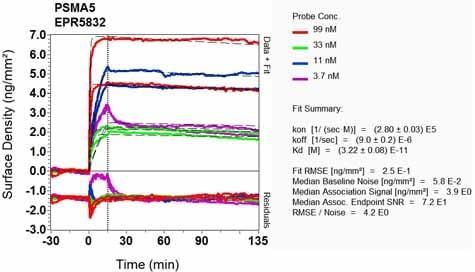 Other - Anti-Proteasome 20S alpha 5/PSMA5 antibody [EPR5832] - BSA and Azide free (ab247843)