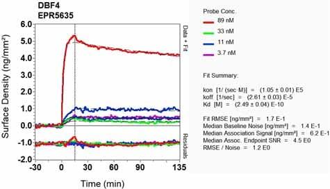 Other - Anti-DBF4 antibody [EPR5635] - BSA and Azide free (ab247972)