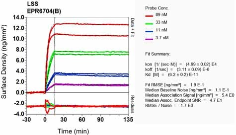Other - Anti-LSS antibody [EPR6704(B)] - BSA and Azide free (ab248003)
