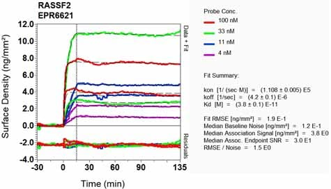 Other - Anti-RASSF2 antibody [EPR6621] - BSA and Azide free (ab248004)