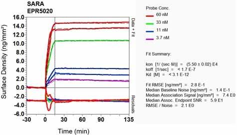 Other - Anti-SARA antibody [EPR5020] - BSA and Azide free (ab248032)