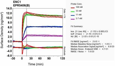 Other - Anti-ENC1 antibody [EPR5406(B)] - BSA and Azide free (ab248050)