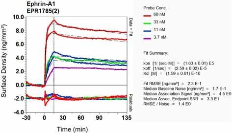 Other - Anti-Ephrin A1 antibody [EPR1785(2)] - BSA and Azide free (ab248056)