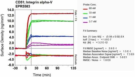 Other - Anti-Integrin alpha V antibody [EPR5583] - BSA and Azide free (ab248077)