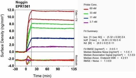 Other - Anti-Noggin antibody [EPR1561] - BSA and Azide free (ab248084)