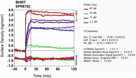 Other - Anti-BHMT antibody [EPR6782] - BSA and Azide free (ab248086)