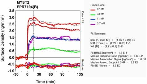 Other - Anti-KAT7 / Hbo1 / MYST2 antibody [EPR7194(B)] - BSA and Azide free (ab248087)