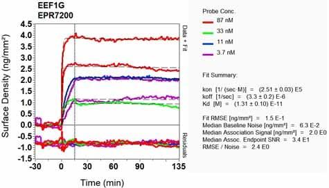 Other - Anti-Elongation factor 1-gamma antibody [EPR7200] - BSA and Azide free (ab248088)
