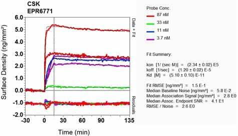 Other - Anti-CSK antibody [EPR6771] - BSA and Azide free (ab248095)
