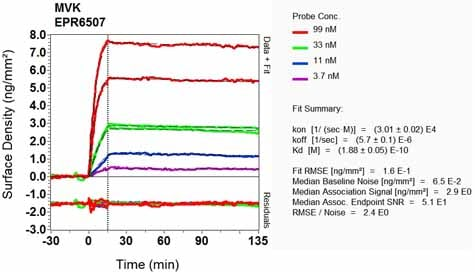 Other - Anti-MVK antibody [EPR6507] - BSA and Azide free (ab248129)