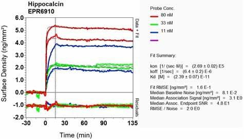 Other - Anti-Hippocalcin antibody [EPR6910] - BSA and Azide free (ab248159)