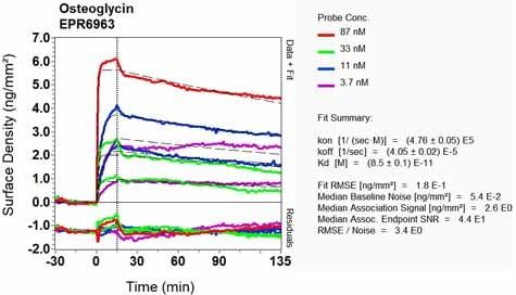 OI-RD Scanning - Anti-OIF antibody [EPR6963] - BSA and Azide free (ab248165)