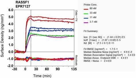 Other - Anti-RASSF1 antibody [EPR7127] - BSA and Azide free (ab248174)
