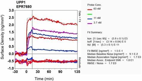 Other - Anti-Uridine Phosphorylase 1 antibody [EPR7680] - BSA and Azide free (ab248189)